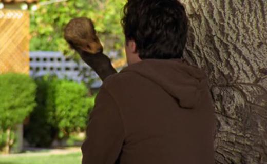 Scrubs Season 5 Episode 8 - My Big Bird